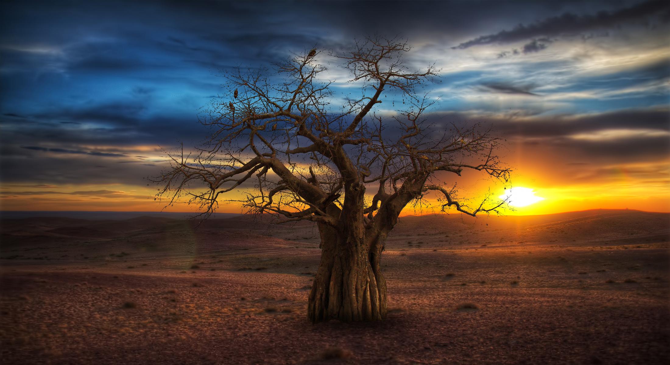 tree_20140527_1655591152